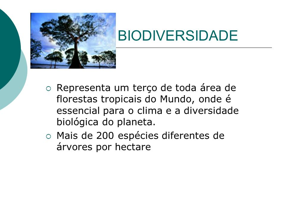 BIODIVERSIDADE Representa um terço de toda área de florestas tropicais do Mundo, onde é essencial para o clima e a diversidade biológica do planeta. M