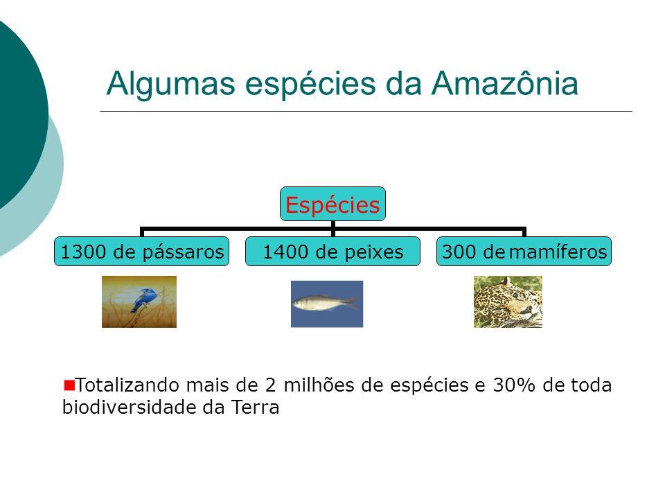 Algumas espécies da Amazônia Espécies 1300 de pássaros 1400 de peixes 300 de mamíferos Totalizando mais de 2 milhões de espécies e 30% de toda biodiversidade da Terra