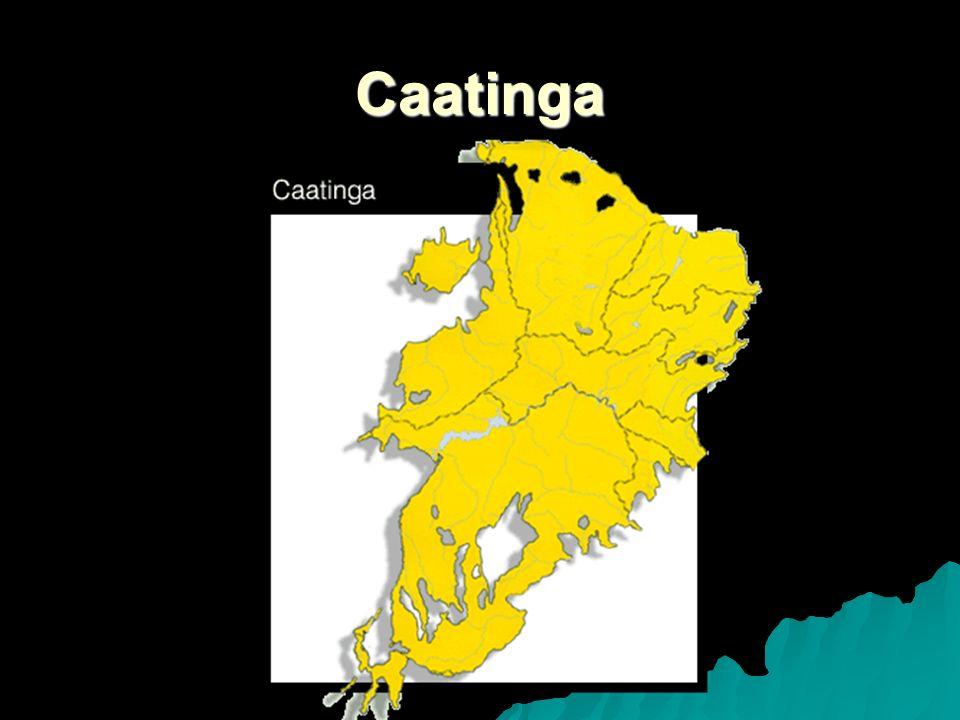 O homem Cerca de 20 milhões de brasileiros vivem na região coberta pela caatinga, em quase 800 mil km2 de área.