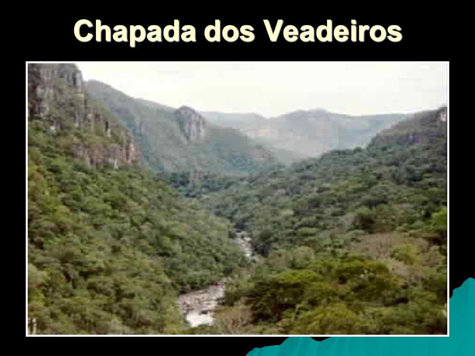 Vegetação A vegetação do cerrado não possui uma fisionomia única em toda a sua extensão.