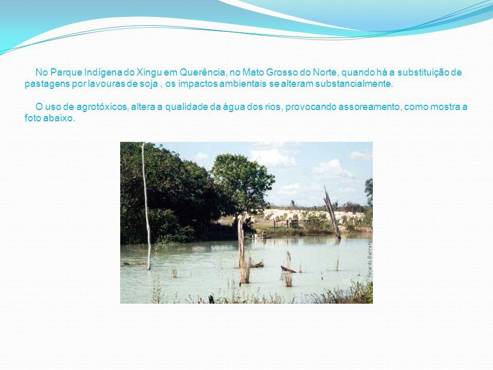 N ] No Parque Indígena do Xingu em Querência, no Mato Grosso do Norte, quando há a substituição de pastagens por lavouras de soja, os impactos ambientais se alteram substancialmente.