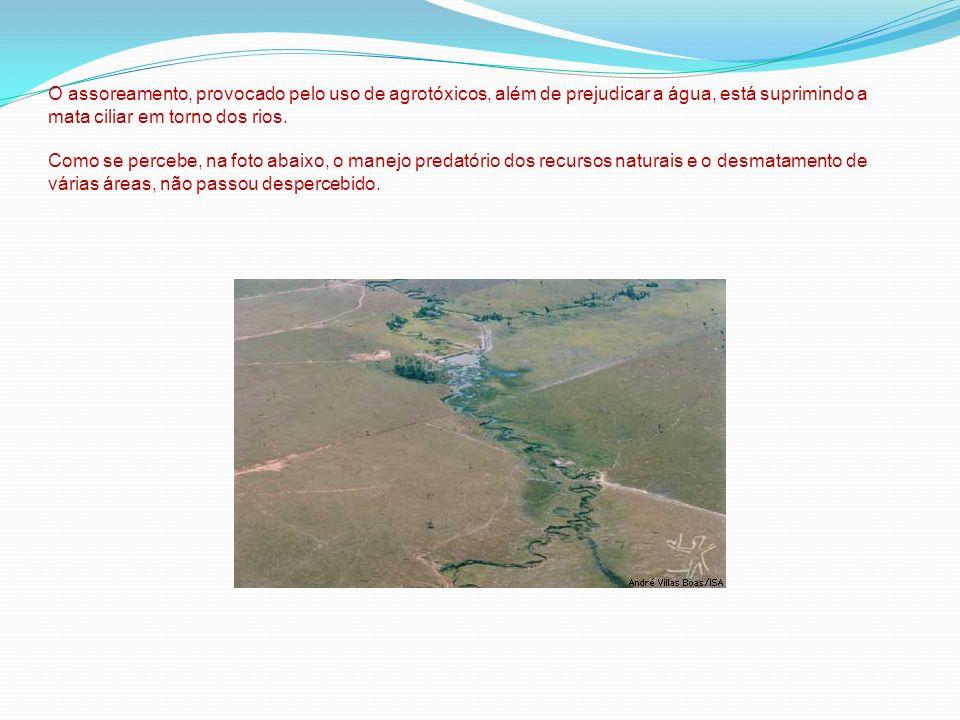 O assoreamento, provocado pelo uso de agrotóxicos, além de prejudicar a água, está suprimindo a mata ciliar em torno dos rios. Como se percebe, na fot
