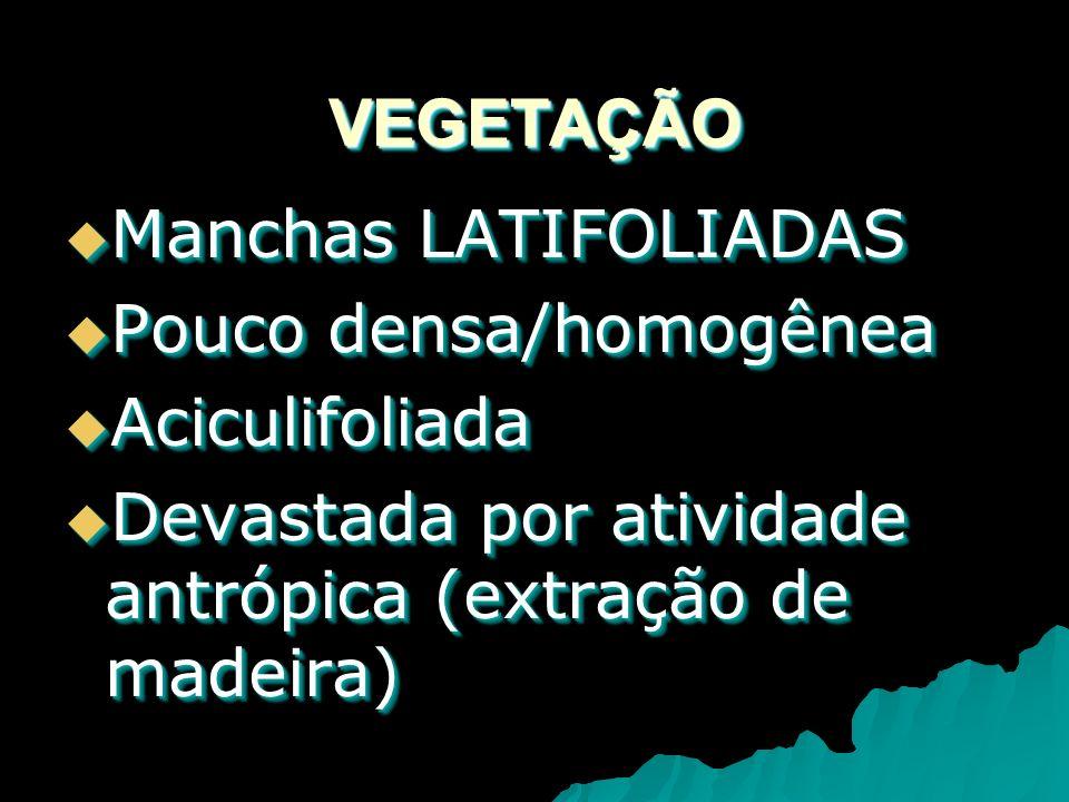 VEGETAÇÃOVEGETAÇÃO Manchas LATIFOLIADAS Manchas LATIFOLIADAS Pouco densa/homogênea Pouco densa/homogênea Aciculifoliada Aciculifoliada Devastada por atividade antrópica (extração de madeira) Devastada por atividade antrópica (extração de madeira) Manchas LATIFOLIADAS Manchas LATIFOLIADAS Pouco densa/homogênea Pouco densa/homogênea Aciculifoliada Aciculifoliada Devastada por atividade antrópica (extração de madeira) Devastada por atividade antrópica (extração de madeira)