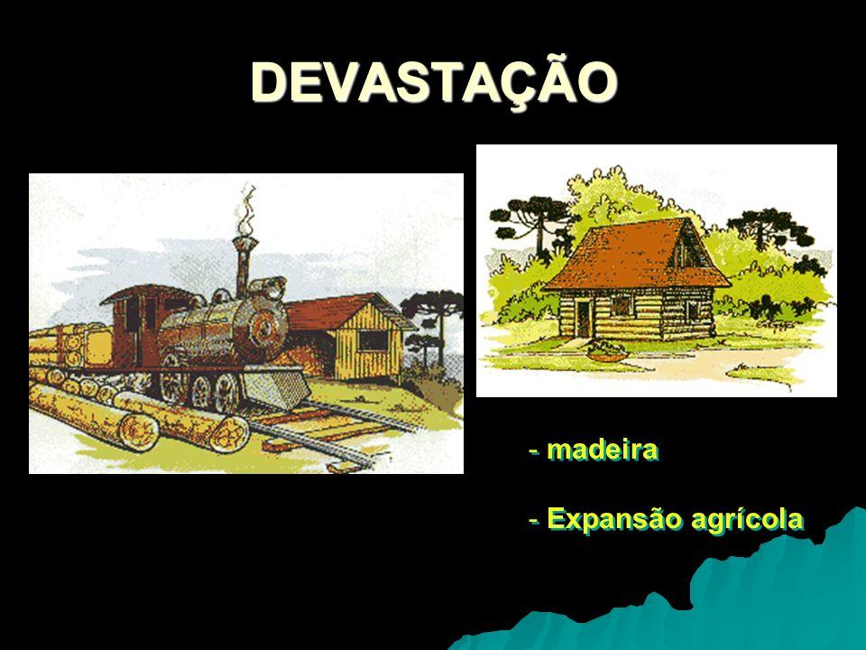DEVASTAÇÃO - madeira - Expansão agrícola - madeira - Expansão agrícola
