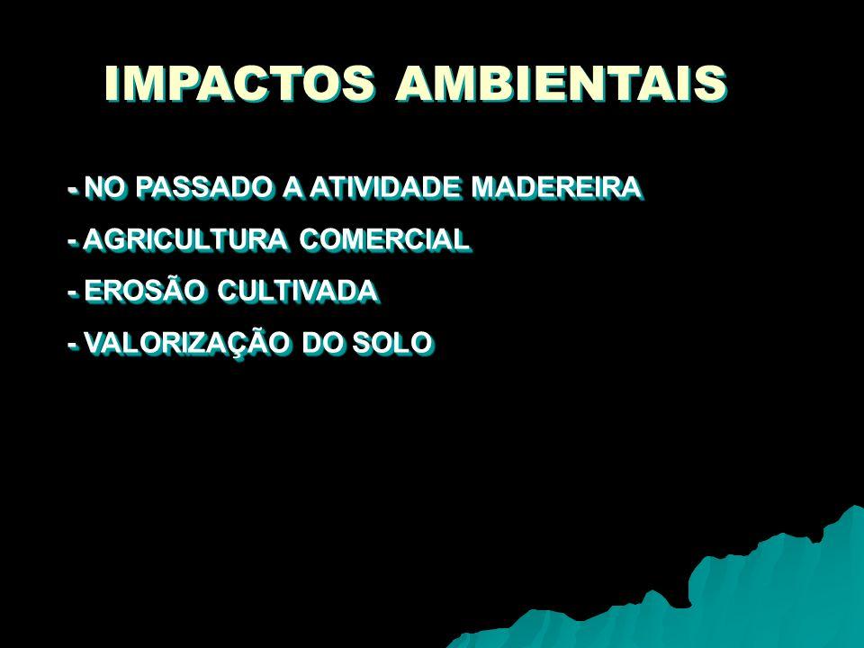 IMPACTOS AMBIENTAIS - NO PASSADO A ATIVIDADE MADEREIRA - AGRICULTURA COMERCIAL - EROSÃO CULTIVADA - VALORIZAÇÃO DO SOLO - NO PASSADO A ATIVIDADE MADEREIRA - AGRICULTURA COMERCIAL - EROSÃO CULTIVADA - VALORIZAÇÃO DO SOLO
