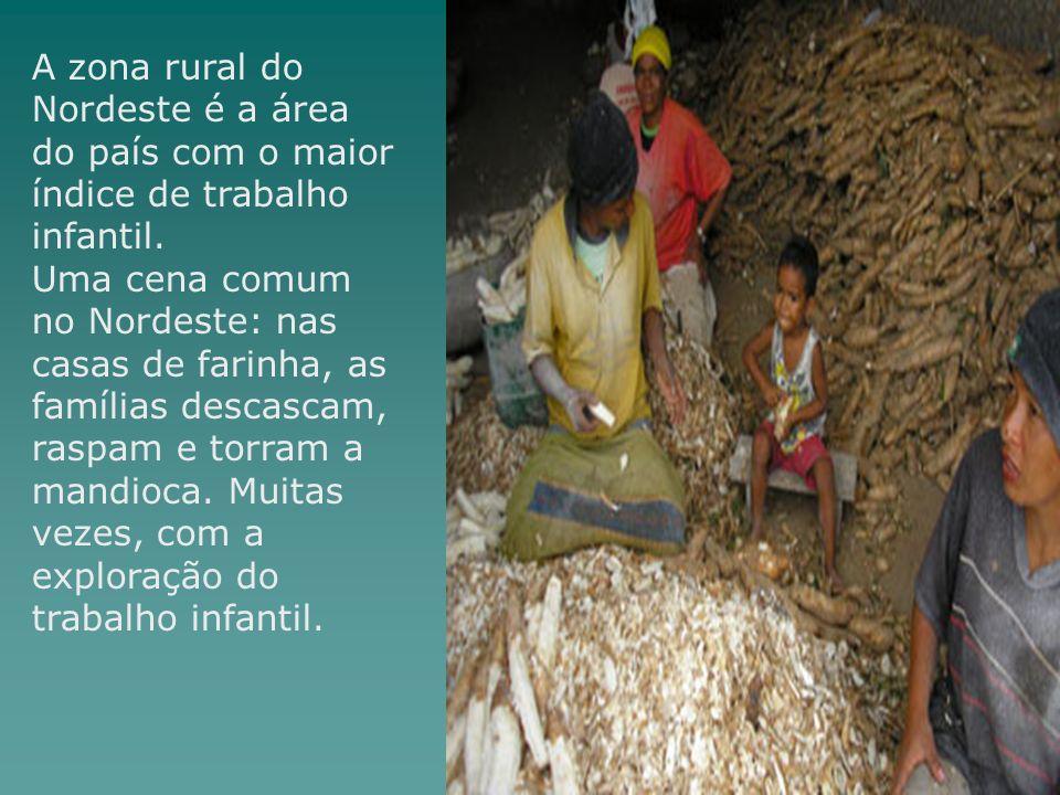 A zona rural do Nordeste é a área do país com o maior índice de trabalho infantil. Uma cena comum no Nordeste: nas casas de farinha, as famílias desca