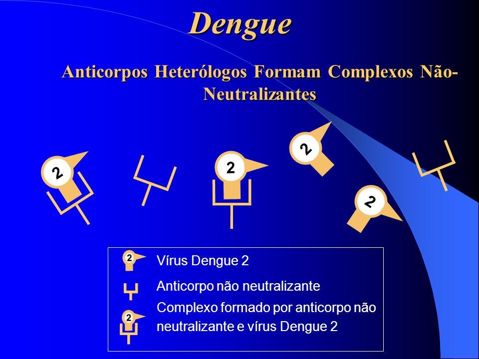 Anticorpos Heterólogos Formam Complexos Não- Neutralizantes 2 2 2 22 Vírus Dengue 2 Anticorpo não neutralizante Complexo formado por anticorpo não neu