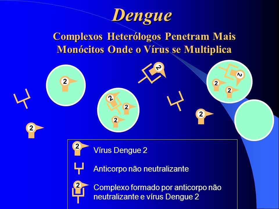 Dengue Complexos Heterólogos Penetram Mais Monócitos Onde o Vírus se Multiplica 22 2 2 2 2 2 2 2 2 2 2 Vírus Dengue 2 Anticorpo não neutralizante Comp