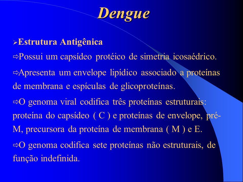 Dengue Estrutura Antigênica Possui um capsídeo protéico de simetria icosaédrico. Apresenta um envelope lipídico associado a proteínas de membrana e es