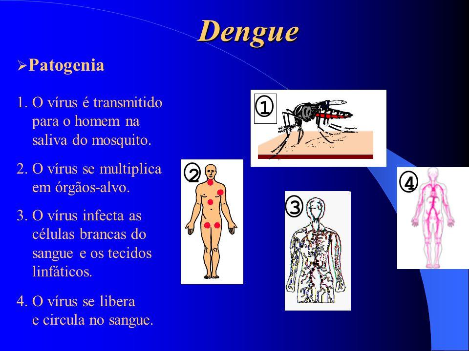 Dengue 6 7 5 5.O segundo mosquito ingere o sangue com o vírus.