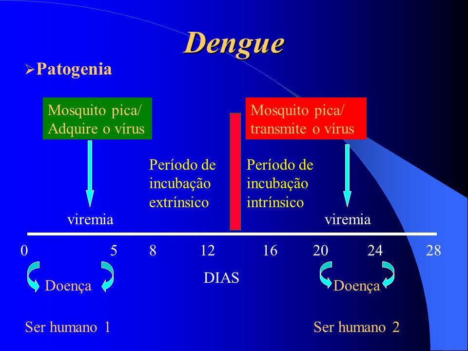Dengue Mosquito pica/ Adquire o vírus viremia 0 5 Doença Ser humano 1 8 12 16 20 24 28 Período de incubação extrínsico Mosquito pica/ transmite o víru