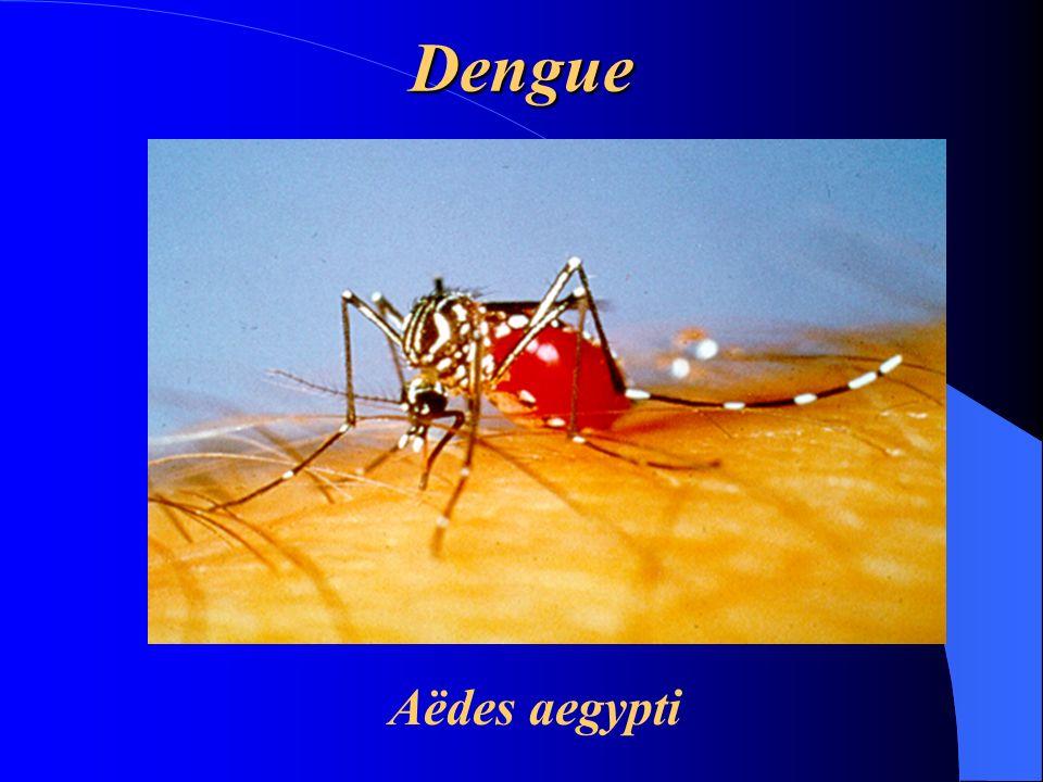 Dengue Diagnóstico Diagnóstico ð Testes laboratoriais è Hemograma completo.