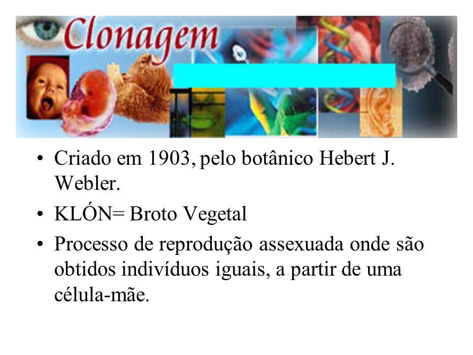 Criado em 1903, pelo botânico Hebert J. Webler. KLÓN= Broto Vegetal Processo de reprodução assexuada onde são obtidos indivíduos iguais, a partir de u