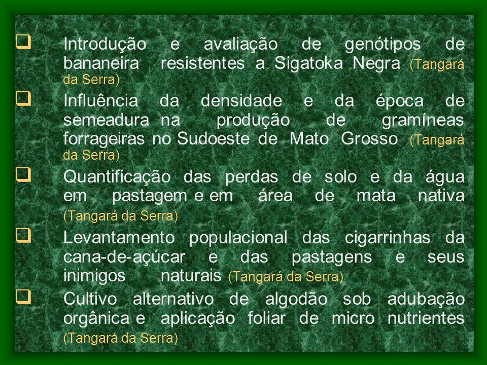 Introdução e avaliação de genótipos de bananeira resistentes a Sigatoka Negra (Tangará da Serra) Influência da densidade e da época de semeadura na pr