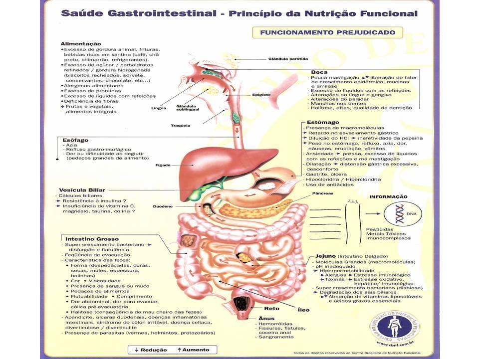 COPROLOGICO FUNCIONAL RESÍDUOS MACROSCÓPICOS Batata ou cenoura ausentes Batata ou cenoura ausentes Fragmentos de carneausentes Fragmentos de carneausentes Tecido conjuntivoausentes Tecido conjuntivoausentes Outros restos alimentarespresentes (++) Outros restos alimentarespresentes (++) Fibras musculares digeridas presentes (+) Fibras musculares digeridas presentes (+) Fibras musculares mal digeridasausentes Fibras musculares mal digeridasausentes Amido incluídopresentes (++) Amido incluídopresentes (++) Amido amorfoausentes Amido amorfoausentes Amido cruausentes Amido cruausentes Flora Iodofilapresente Flora Iodofilapresente Gorduras neutrasausentes Gorduras neutrasausentes Sabõesausentes Sabõesausentes Ácidos graxosausentes Ácidos graxosausentes Oxalato de cálcioausentes Oxalato de cálcioausentes Fosfato Triploausentes Fosfato Triploausentes