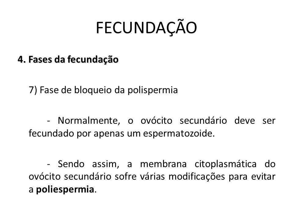 4. Fases da fecundação 7) Fase de bloqueio da polispermia - Normalmente, o ovócito secundário deve ser fecundado por apenas um espermatozoide. - Sendo