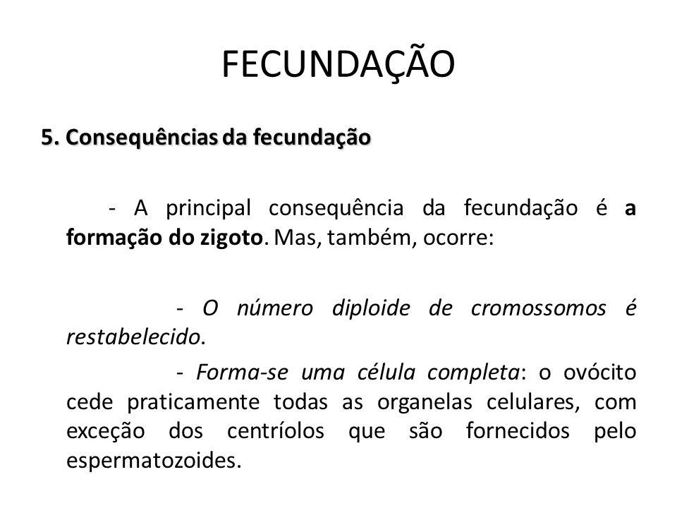 5. Consequências da fecundação - A principal consequência da fecundação é a formação do zigoto. Mas, também, ocorre: - O número diploide de cromossomo