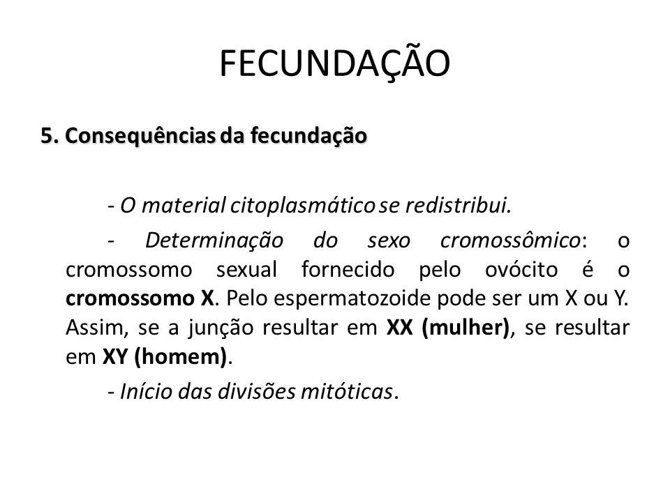 5. Consequências da fecundação - O material citoplasmático se redistribui. - Determinação do sexo cromossômico: o cromossomo sexual fornecido pelo ovó