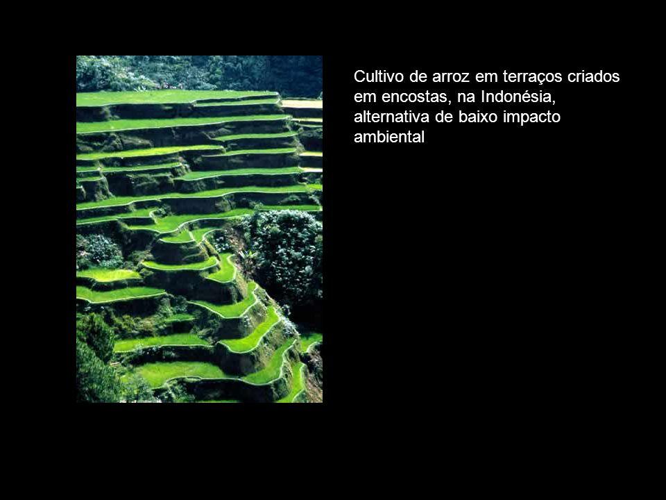 Cultivo de arroz em terraços criados em encostas, na Indonésia, alternativa de baixo impacto ambiental