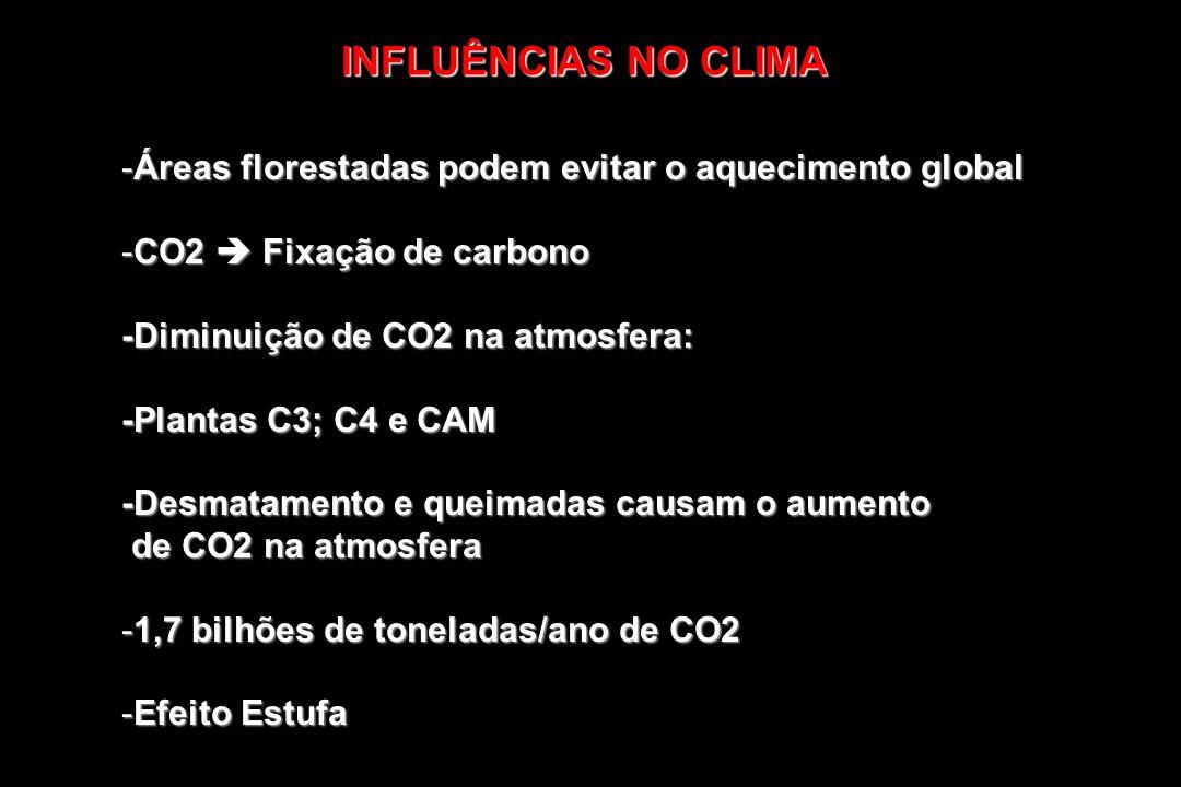 -Interferências no micro-clima e no clima de uma região -Funcionam como reguladores climáticos -Contribuem para a formação de nuvens devido a transpiração das plantas a transpiração das plantas INFLUÊNCIAS NO CLIMA