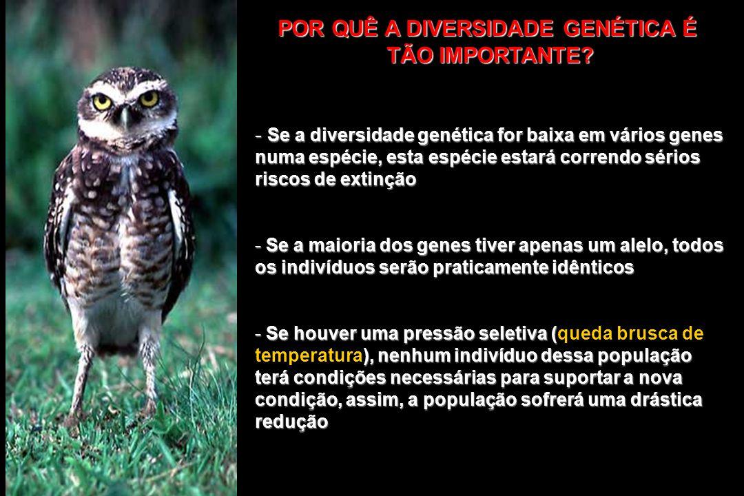 POR QUÊ A DIVERSIDADE GENÉTICA É TÃO IMPORTANTE? - Se a diversidade genética for baixa em vários genes numa espécie, esta espécie estará correndo séri