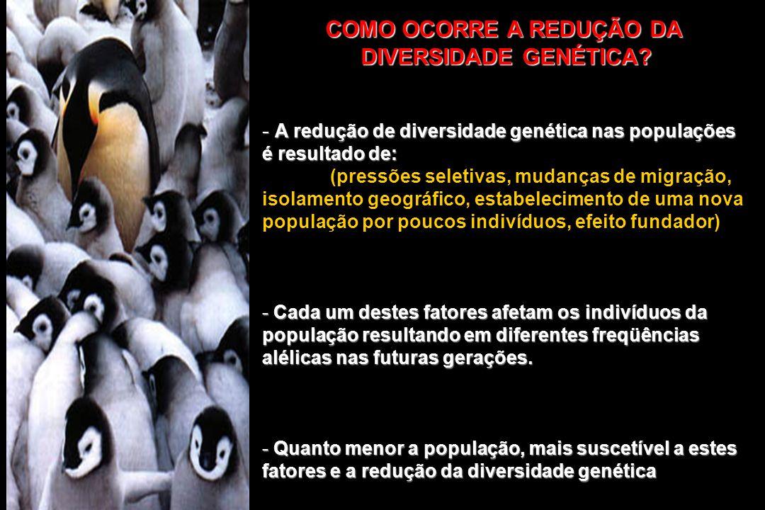 COMO OCORRE A REDUÇÃO DA DIVERSIDADE GENÉTICA? - A redução de diversidade genética nas populações é resultado de: (pressões seletivas, mudanças de mig