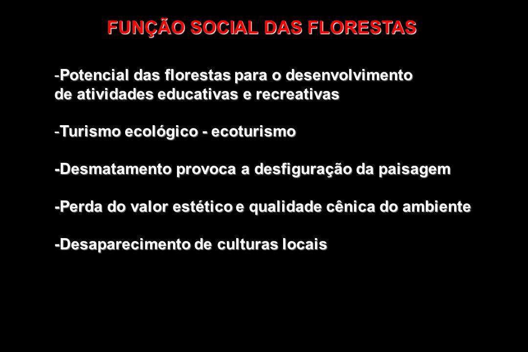 -Potencial das florestas para o desenvolvimento de atividades educativas e recreativas -Turismo ecológico - ecoturismo -Desmatamento provoca a desfigu