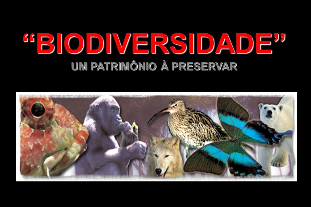 BRASIL, O PAÍS DA MEGADIVERSIDADE - Brasil possui alto grau de endemismo - 294 espécies, cerca de 10% do total mundial - Anfíbio: 294 espécies, cerca de 10% do total mundial