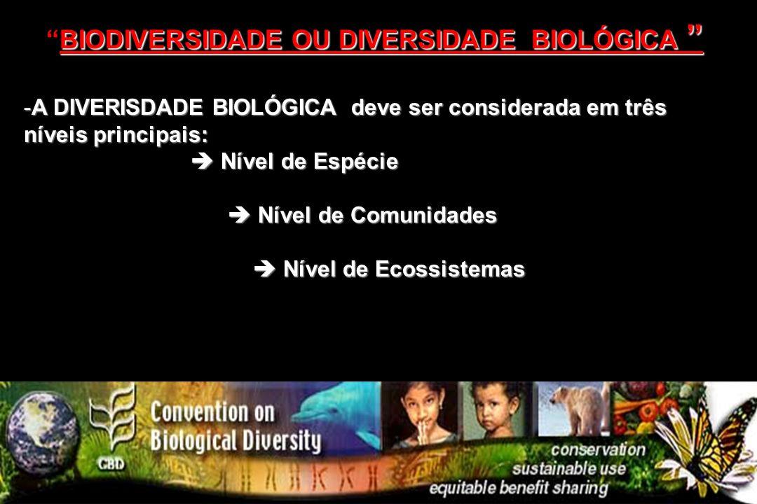 -A DIVERISDADE BIOLÓGICA deve ser considerada em três níveis principais: Nível de Espécie Nível de Espécie Nível de Comunidades Nível de Comunidades N