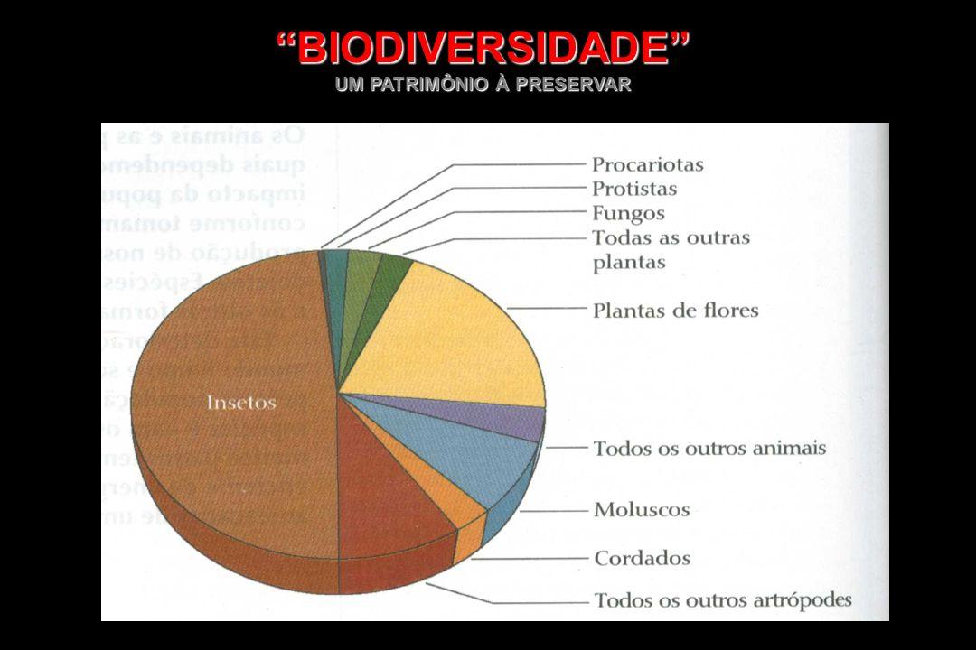 -A maior diversidade biológica do mundo é encontrada nas regiões tropicais, com grande concentração nas florestas tropicais, recifes de corais, lagos e oceanos -A maioria das espécies do mundo ainda não foi descrita ou identificada BIODIVERSIDADE OU DIVERSIDADE BIOLÓGICA BIODIVERSIDADE OU DIVERSIDADE BIOLÓGICA