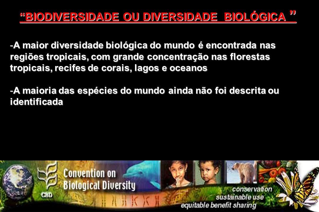 -A maior diversidade biológica do mundo é encontrada nas regiões tropicais, com grande concentração nas florestas tropicais, recifes de corais, lagos