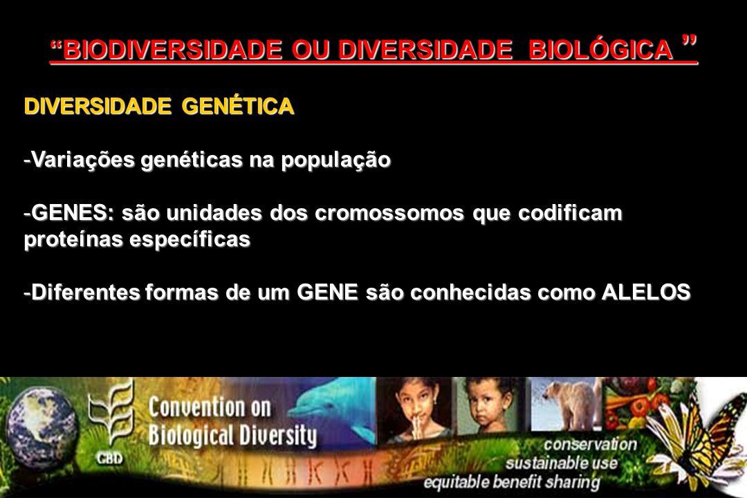DIVERSIDADE GENÉTICA -Variações genéticas na população -GENES: são unidades dos cromossomos que codificam proteínas específicas -Diferentes formas de