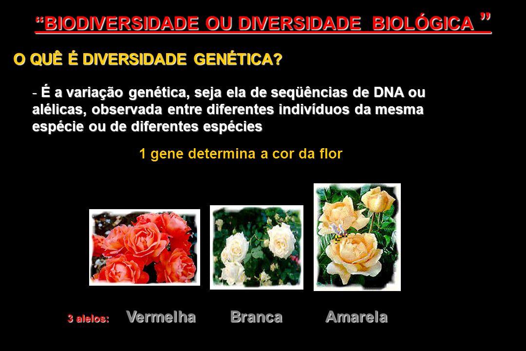 O QUÊ É DIVERSIDADE GENÉTICA? - É a variação genética, seja ela de seqüências de DNA ou alélicas, observada entre diferentes indivíduos da mesma espéc