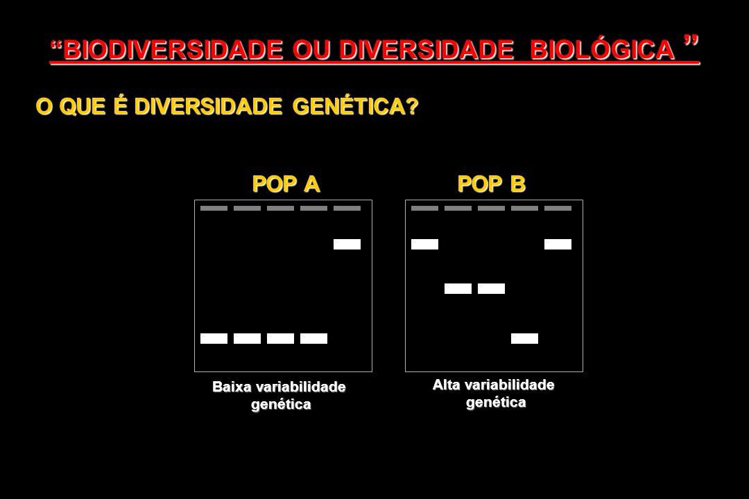 O QUE É DIVERSIDADE GENÉTICA? Baixa variabilidade genética Alta variabilidade genética POP A POP B BIODIVERSIDADE OU DIVERSIDADE BIOLÓGICA BIODIVERSID