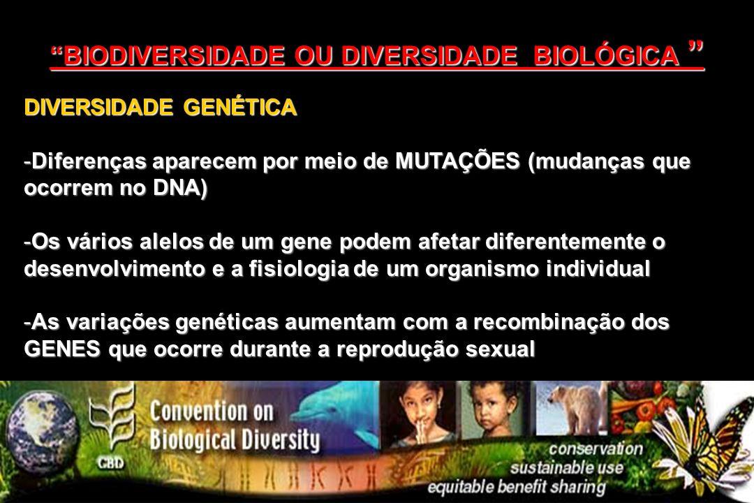 DIVERSIDADE GENÉTICA -Diferenças aparecem por meio de MUTAÇÕES (mudanças que ocorrem no DNA) -Os vários alelos de um gene podem afetar diferentemente