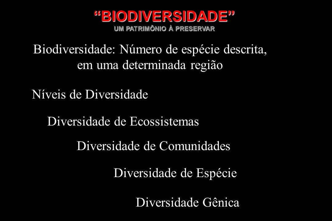 BIODIVERSIDADE Níveis de Diversidade Diversidade de Ecossistemas Diversidade de Comunidades Diversidade de Espécie Diversidade Gênica Biodiversidade: