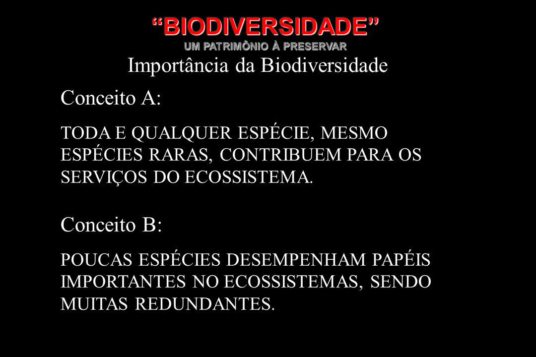 BIODIVERSIDADE UM PATRIMÔNIO À PRESERVAR Importância da Biodiversidade Conceito A: TODA E QUALQUER ESPÉCIE, MESMO ESPÉCIES RARAS, CONTRIBUEM PARA OS S