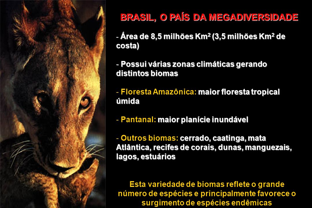 BRASIL, O PAÍS DA MEGADIVERSIDADE - Área de 8,5 milhões Km 2 (3,5 milhões Km 2 de costa) - Possui várias zonas climáticas gerando distintos biomas mai