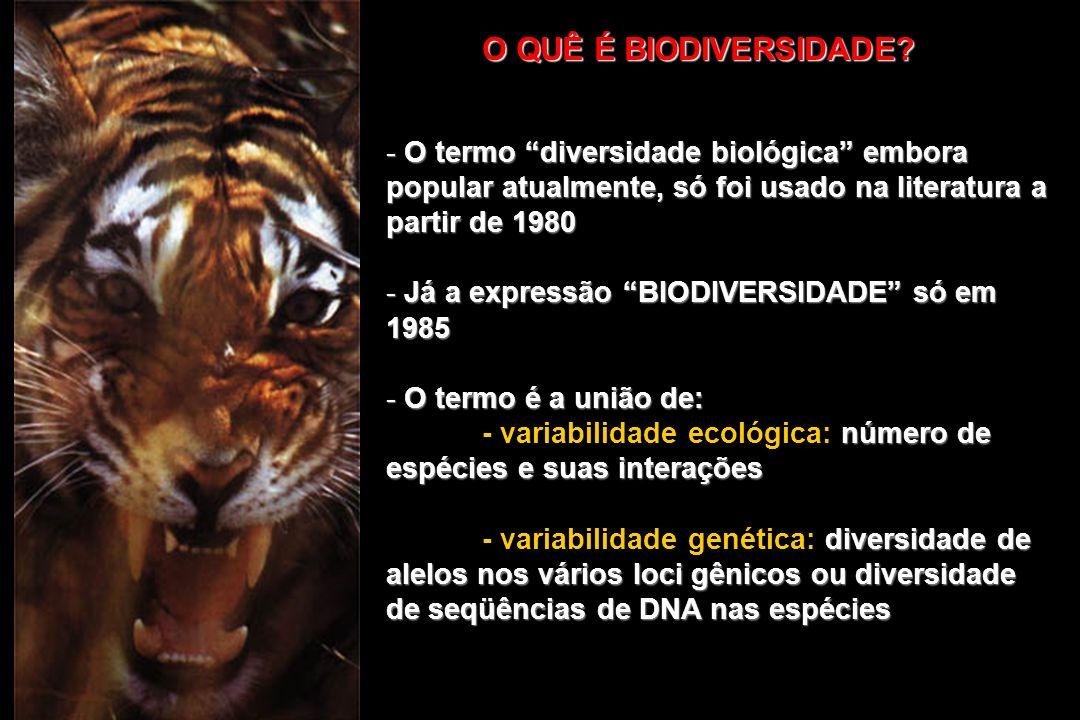 O QUÊ É BIODIVERSIDADE? - O termo diversidade biológica embora popular atualmente, só foi usado na literatura a partir de 1980 - Já a expressão BIODIV