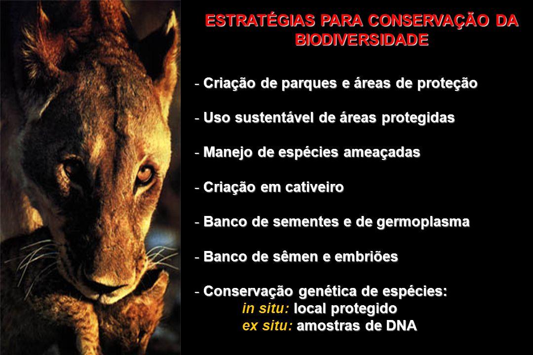 ESTRATÉGIAS PARA CONSERVAÇÃO DA BIODIVERSIDADE - Criação de parques e áreas de proteção - Uso sustentável de áreas protegidas - Manejo de espécies ame