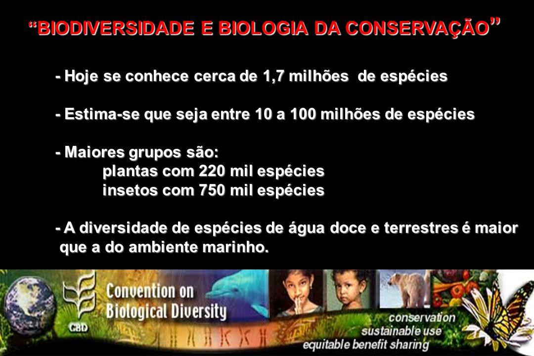 -A DIVERISDADE BIOLÓGICA deve ser considerada em três níveis principais: Nível de Espécie Nível de Espécie Nível de Comunidades Nível de Comunidades Nível de Ecossistemas Nível de Ecossistemas BIODIVERSIDADE OU DIVERSIDADE BIOLÓGICABIODIVERSIDADE OU DIVERSIDADE BIOLÓGICA