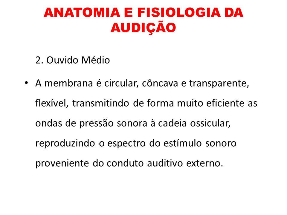 ANATOMIA E FISIOLOGIA DA AUDIÇÃO 2. Ouvido Médio A membrana é circular, côncava e transparente, flexível, transmitindo de forma muito eficiente as ond