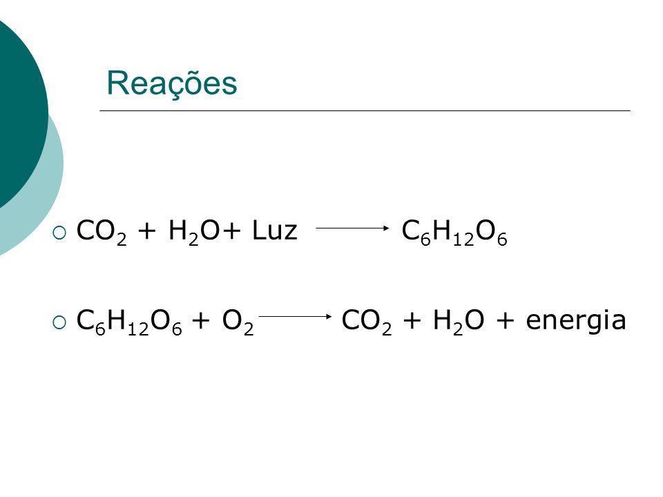 Reações CO 2 + H 2 O+ Luz C 6 H 12 O 6 C 6 H 12 O 6 + O 2 CO 2 + H 2 O + energia