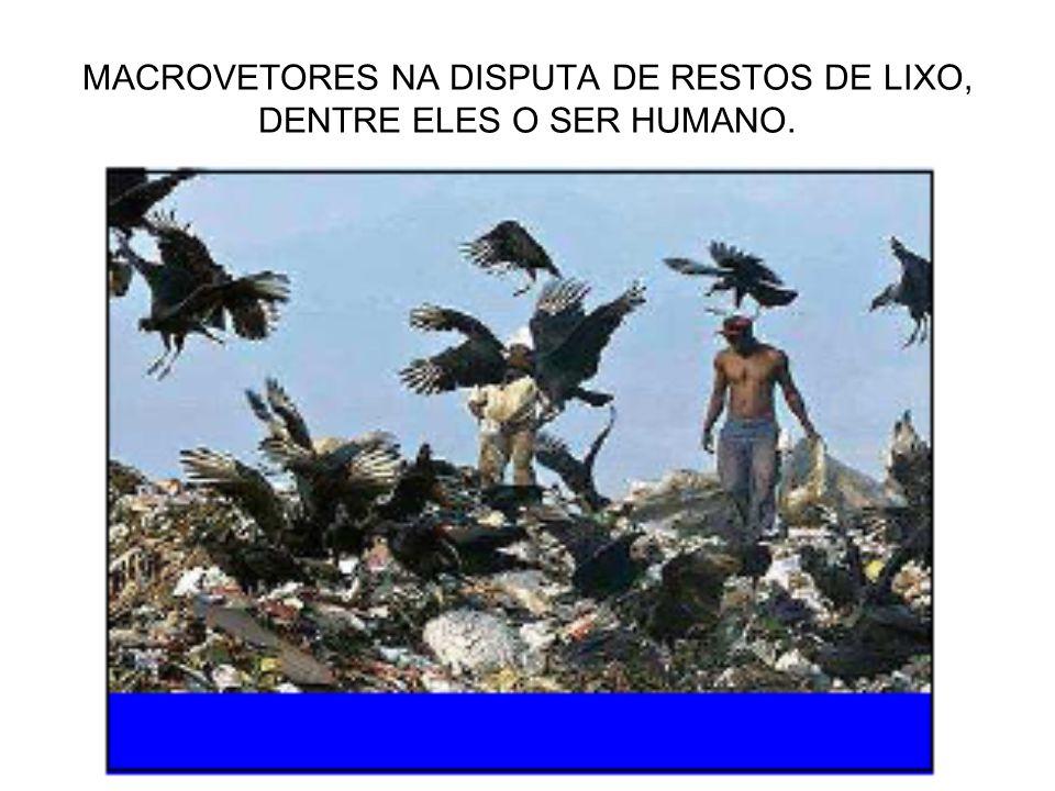 TABELA DE TEMPO DE SOBREVIVÊNCIA DOS MICROVETORES.