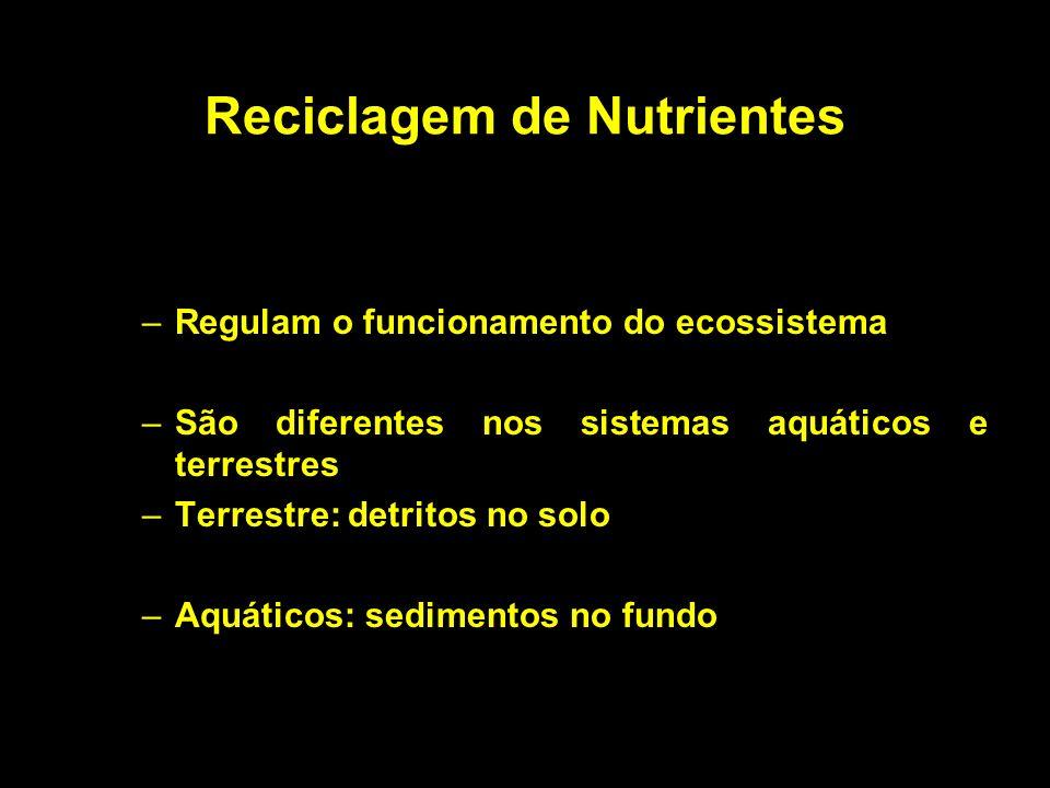 Reciclagem de Nutrientes –Regulam o funcionamento do ecossistema –São diferentes nos sistemas aquáticos e terrestres –Terrestre: detritos no solo –Aqu