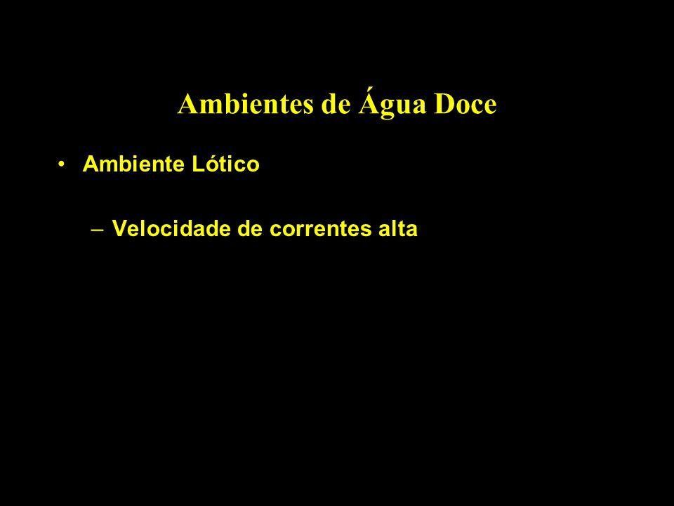 Ambientes de Água Doce Ambiente Lótico –Velocidade de correntes alta