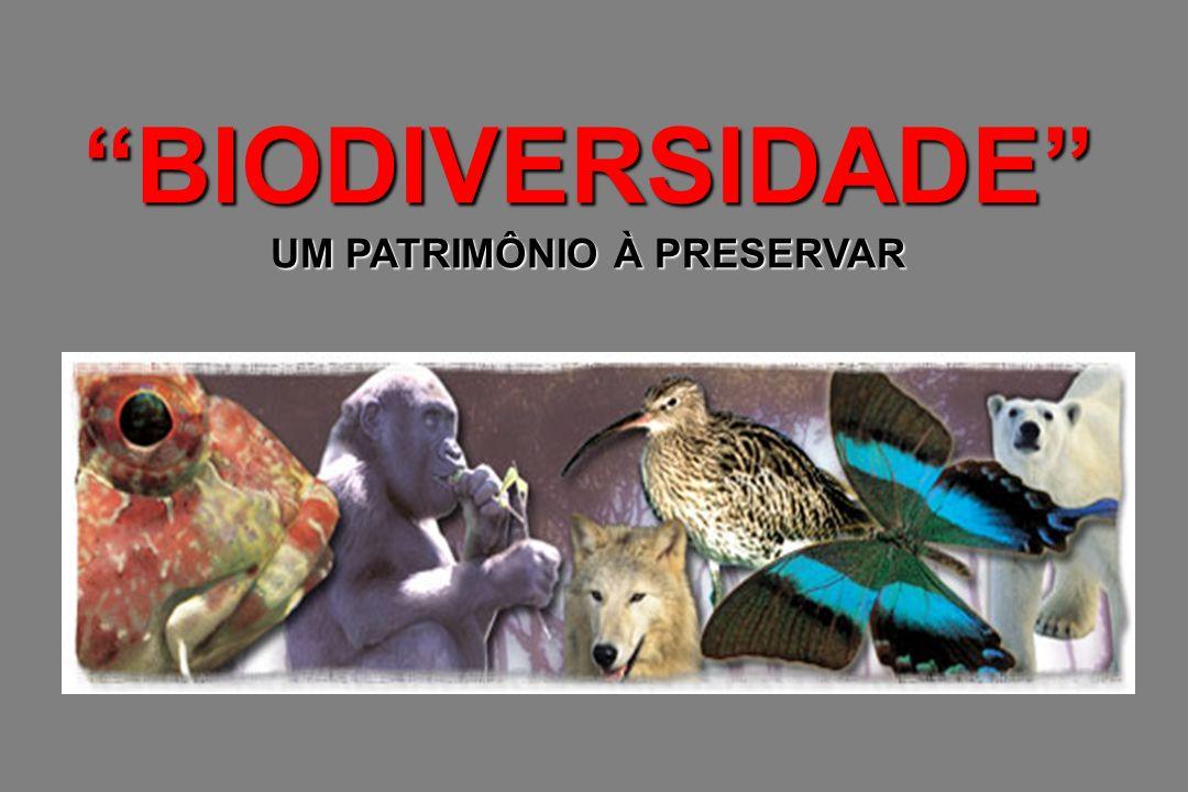 BIODIVERSIDADE UM PATRIMÔNIO À PRESERVAR