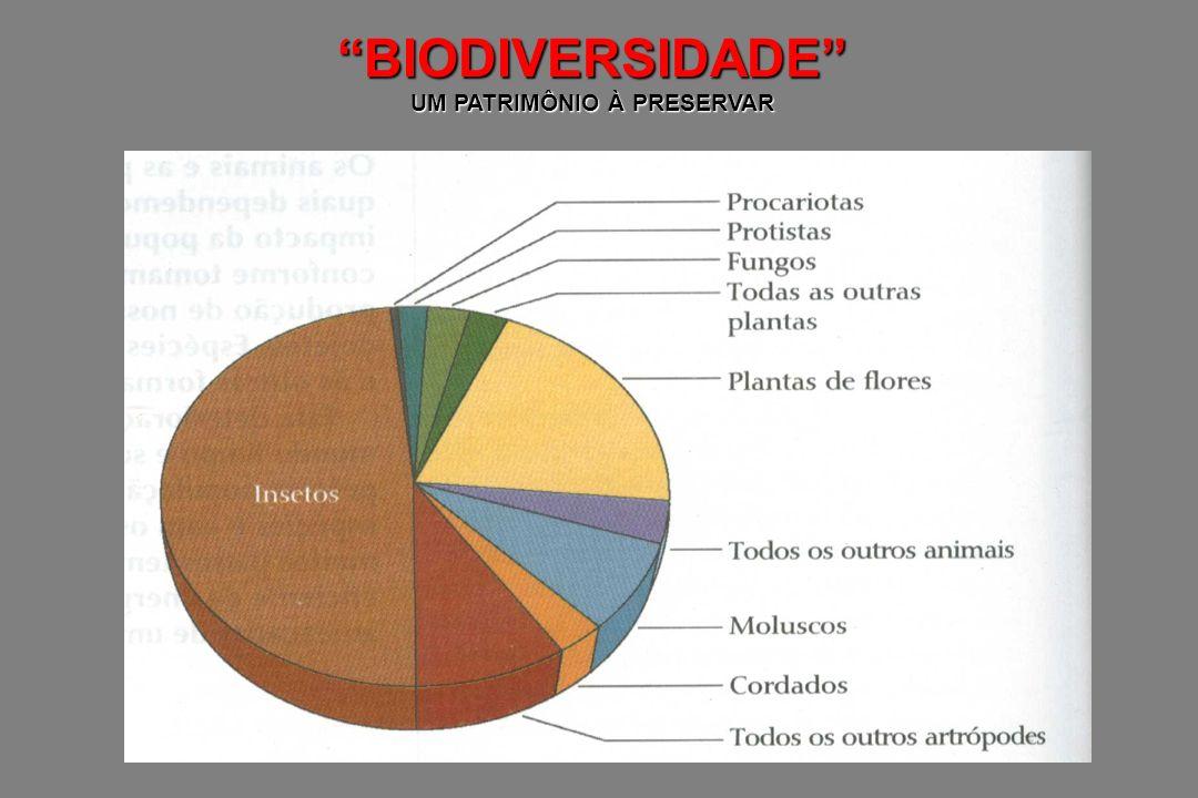 BIODIVERSIDADE Níveis de Diversidade Diversidade de Ecossistemas Diversidade de Comunidades Diversidade de Espécie Diversidade Gênica Biodiversidade: Número de espécie descrita, em uma determinada região