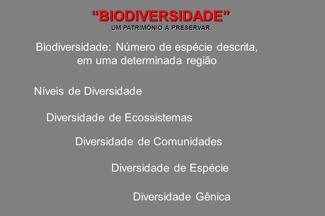 BIODIVERSIDADE UM PATRIMÔNIO À PRESERVAR Importância da Biodiversidade Conceito A: TODA E QUALQUER ESPÉCIE, MESMO ESPÉCIES RARAS, CONTRIBUI PARA OS SERVIÇOS DO ECOSSISTEMA.