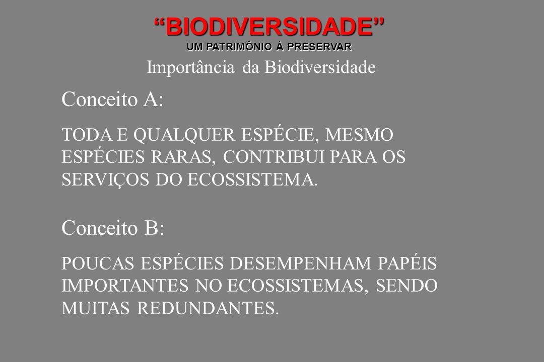 BIODIVERSIDADE UM PATRIMÔNIO À PRESERVAR Importância da Biodiversidade Conceito A: TODA E QUALQUER ESPÉCIE, MESMO ESPÉCIES RARAS, CONTRIBUI PARA OS SE